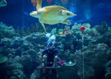 Aquacadabra: Malaysia's First Underwater Magic Show!