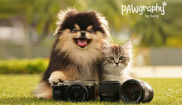 Up Your Pawgraphy Game – Look Your Best with Your Furry Friend in Stunning Photos and Videos